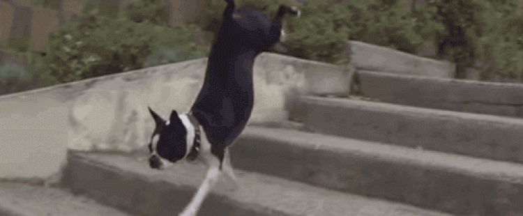 Dogs Vs. Stairs