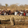 Monster Crocodile Caught In The Zambezi (Niger) River In Zimbabwe Africa