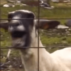The Ultimate Goat Edition Supercut
